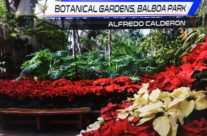 Poinsettias Featured on Local News