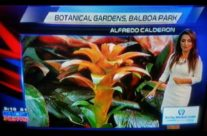 Botanical Flower Featured on Local News