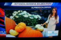 Pumpkins Featured on Local News